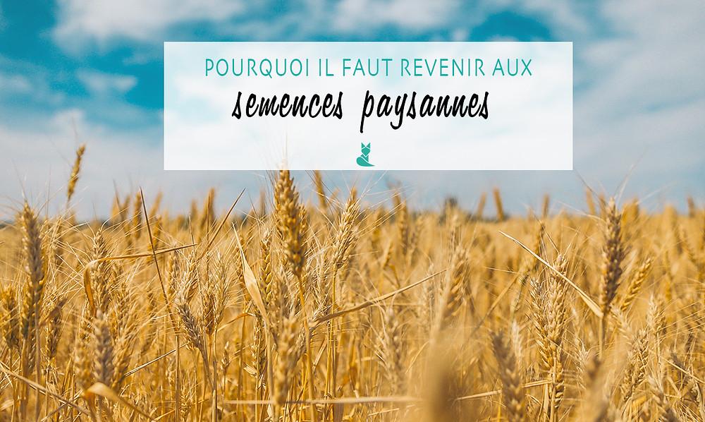 semences paysannes agriculture ecologie