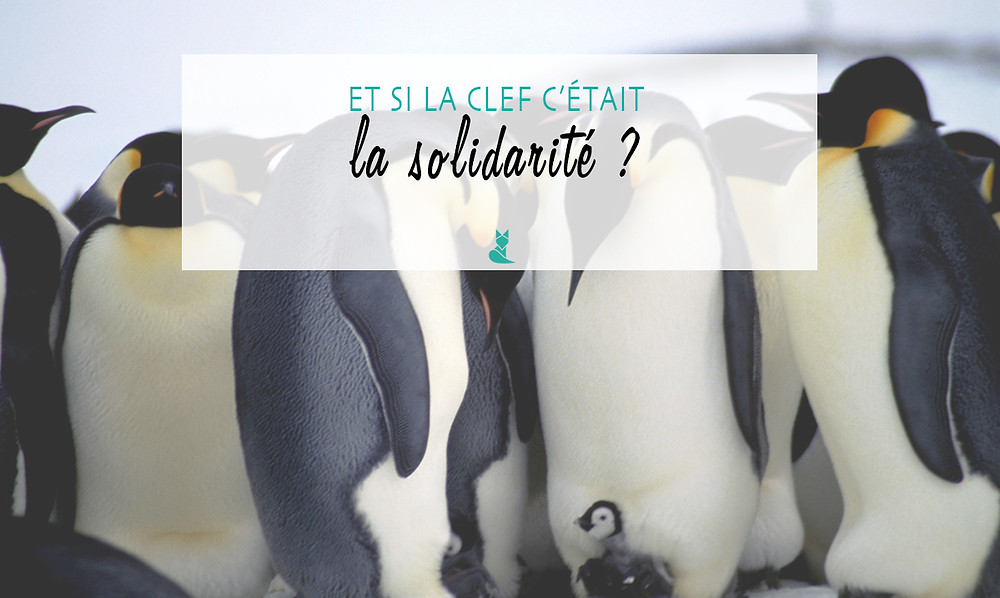 solidaire