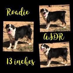 roadie7-371x371
