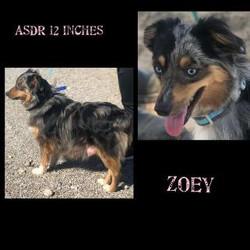 zoey2-321x321