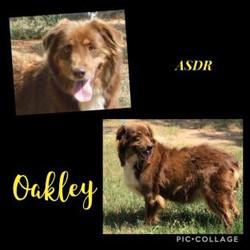 oakley12-313x313