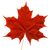 cropped-Maple-Leaf.png