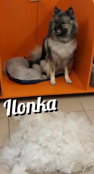 Polish_20210326_220452358.jpg
