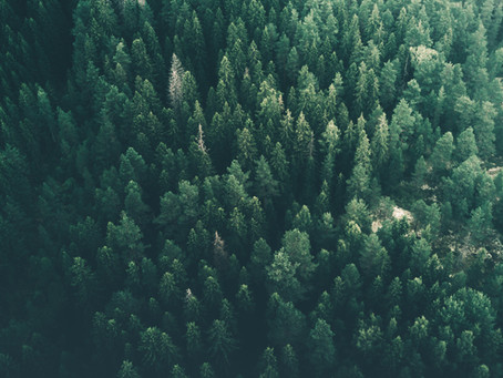 Metsäalan digitalisoituminen jatkuu: Simosol ja Tapio kehittävät uutta metsätietojärjestelmää