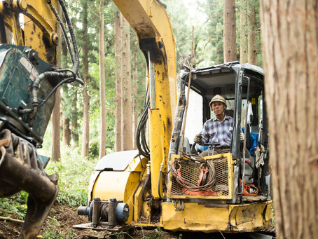 From the forest to the mills - How to ensure an efficient supply chain