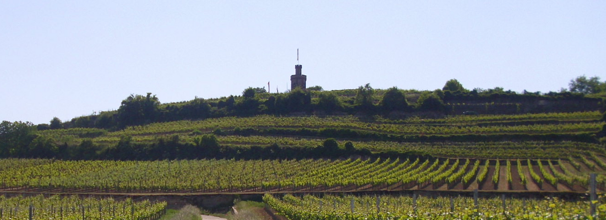 Fuchsmantel.png