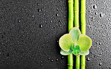 lotus-bambus_982579261.jpg