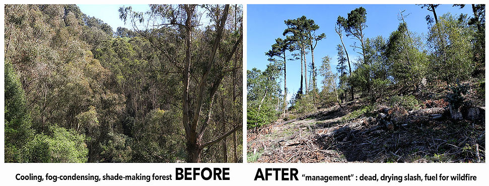 BEFORE-AFTER-forest-management-East-Bay-