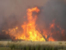 brush-fire-flames-taller-than-trees-Blac