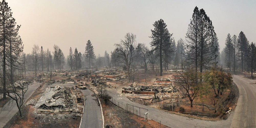 Houses consumed by fire, yet living trees survive.  Why?