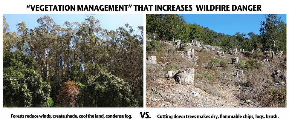 BEFORE-AFTER-VEGETATION-MANAGEMENT-Incre