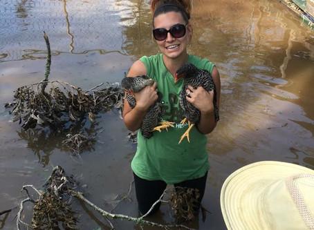 More Animal Rescue in Victoria, Texas
