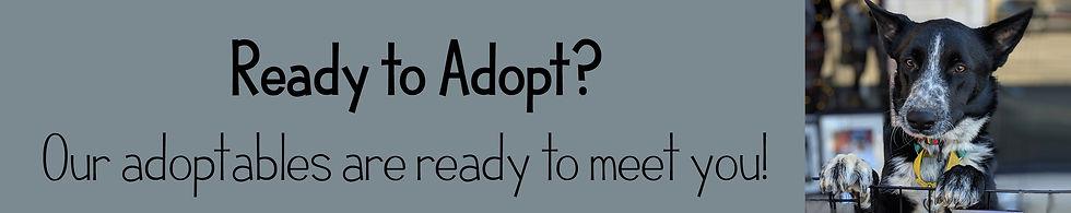 Ready to Adopt.jpg
