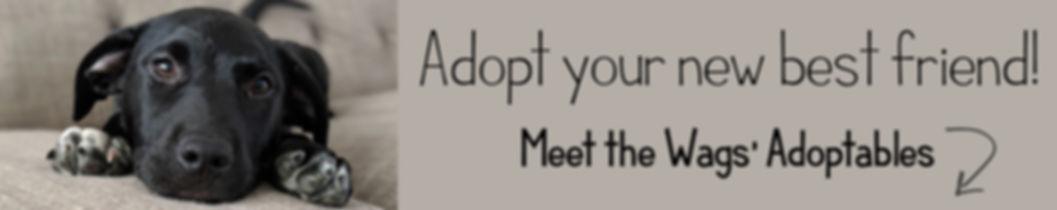 Dogs for Adoption.jpg