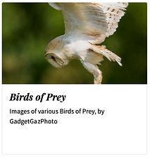 05_Birds of Prey.jpg