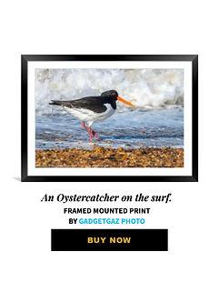 62 An Oystercatcher on the surf..jpg