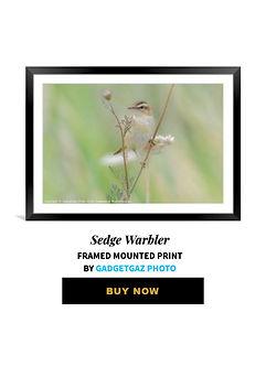 64 Sedge Warbler.jpg