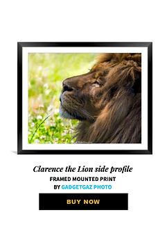16 Clarence the Lion side profile.jpg