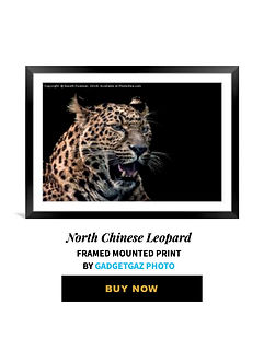 01 North Chinese Leopard 01.jpg