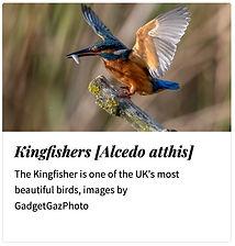 07 Kingfishers.jpg