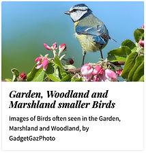 09_Garden woodland marshland.jpg