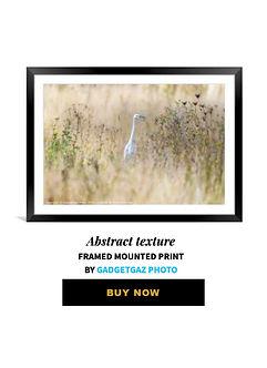 71 Little egret in fields.jpg