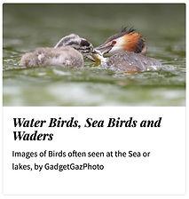 08_Water birds.jpg