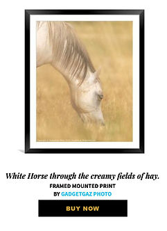 69 White Horse through the creamy fields