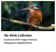 00_The Birds complete collection.jpg