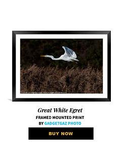 23 Great White Egret.jpg