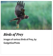 05_Birds of Prey.jpg