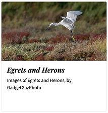 06_Egrets Herons.jpg
