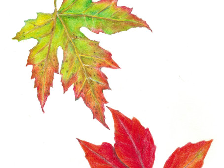 Colored Pencil Art with a Fall Leaf Theme