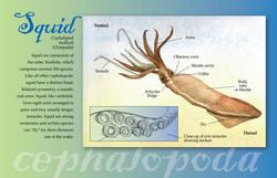 Squid Poster 11x17-01