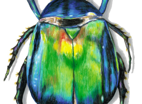The Bug Show at Plank Studios & Gallery