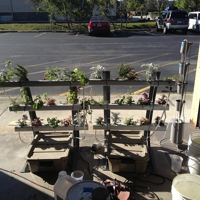 Hydroponics is awesome! Fresh OceanGrown herbs and edible flowers #oceangrown #oceansolution #hydrop