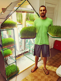 Grow your own wheatgrass with OceanSolution 2-0-3