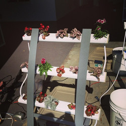 OceanSolution and Mobile Farming System R&D #oceangrown #oceansolution #hydroponic #organic