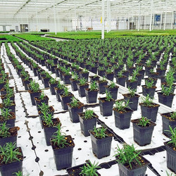 Check out our friends over at _ediblegardenusa  They are integrating #OceanSolution into their produ