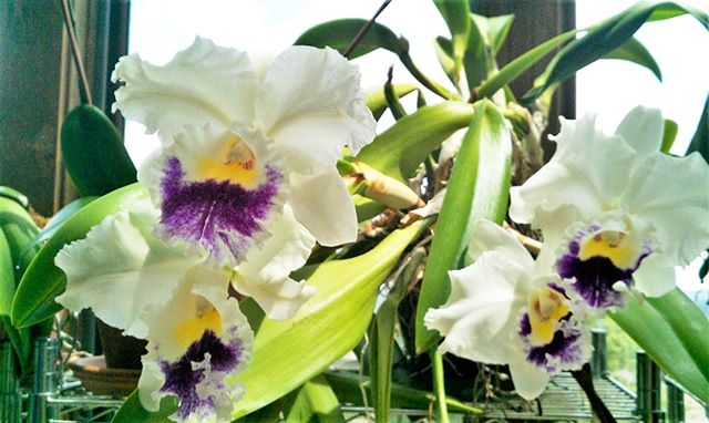 Organic Orchid - Customer Photo