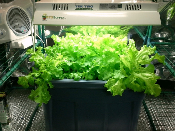 Hydroponic Growing Tips for Beginners