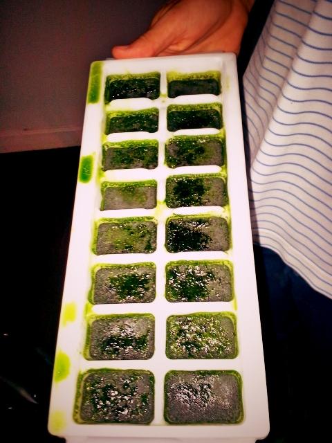 wheatgrass ice cubes