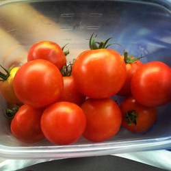 Tomatoes taste better when grown with OceanSolution