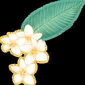 Plumeria Çiçek
