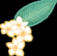 Plumeria Fleur