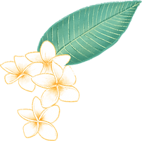 Плюмерия цветок