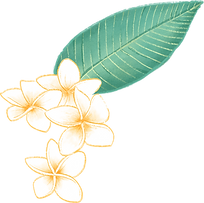 flor Plumeria