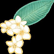 Plumeriablume