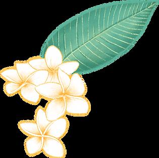 Plumeria Flower