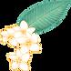 Plumeria Fiore